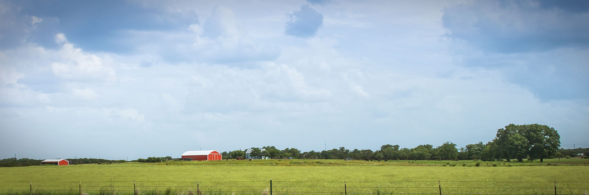 Texas summer crop