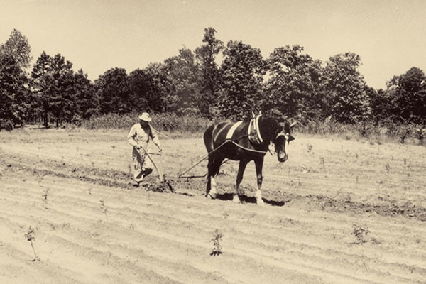 Historical photo of farmer in field