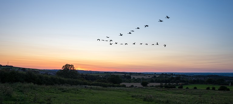 Birds fly in V-formation above a rural Alabama landscape
