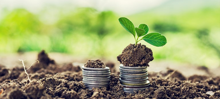 Seedling in soil sitting on a stack of coins