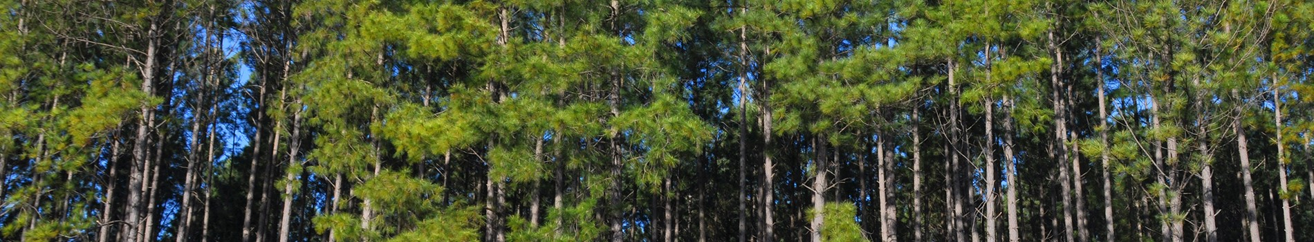 Timber Loans